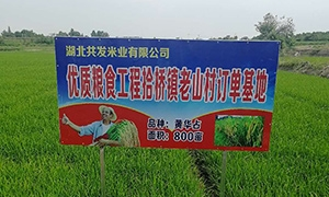 热烈庆祝湖北共发米业有限公司官网上线啦!