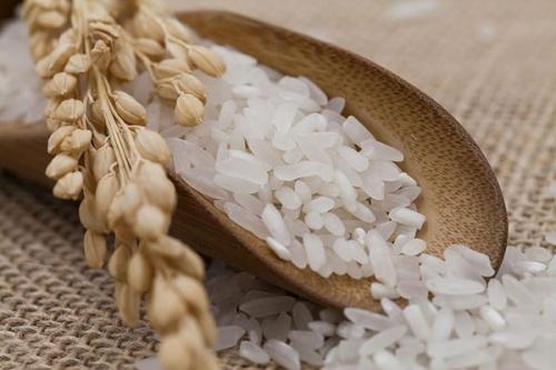 早稻有哪些优势及种植区域